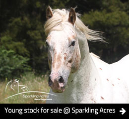 Sparkling Acres Appaloosas